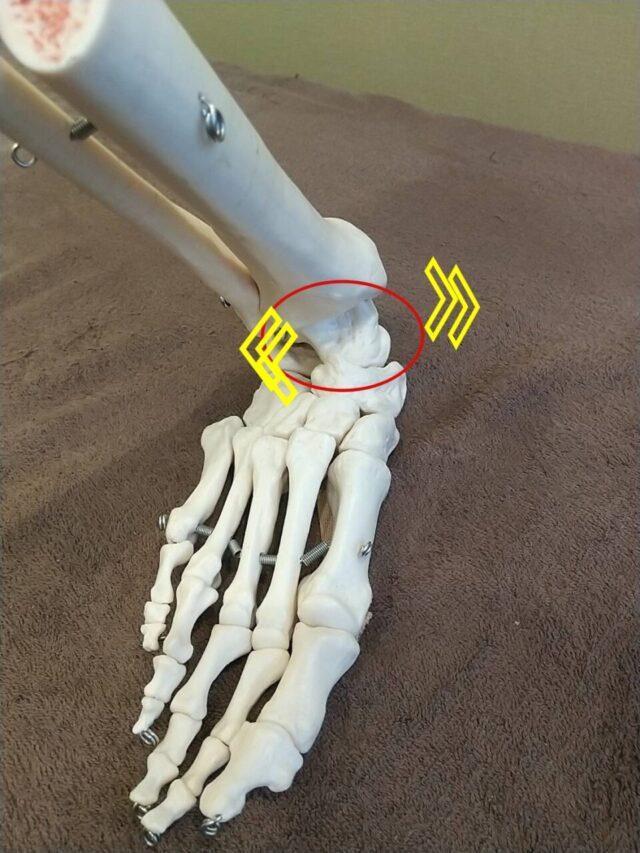 足首の真ん中にある距骨がズレる事で外反母趾の原因にもなる!?